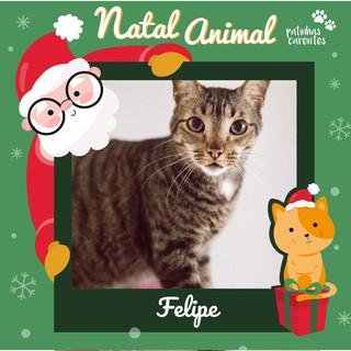 Kit Natal - Felipe