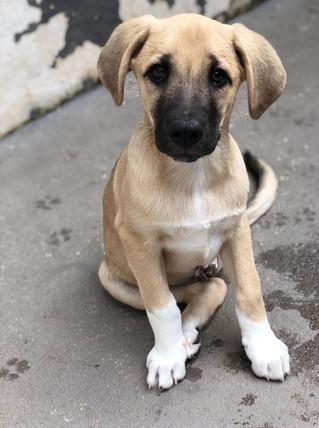 zeus_cachorro-para-adocao_patinhascarentes_04.jpeg