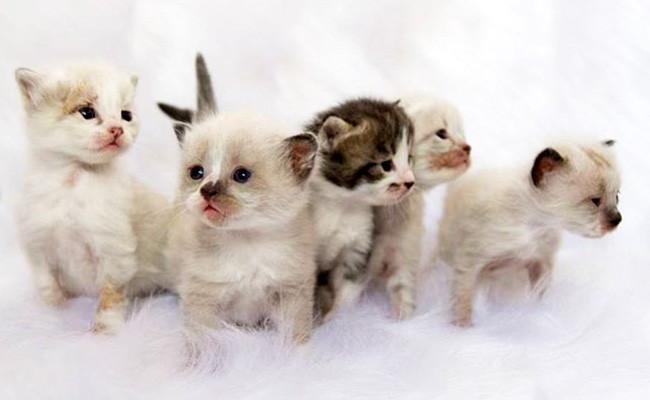 salve a vida de um gatinho ou cachorrinho recém nascido