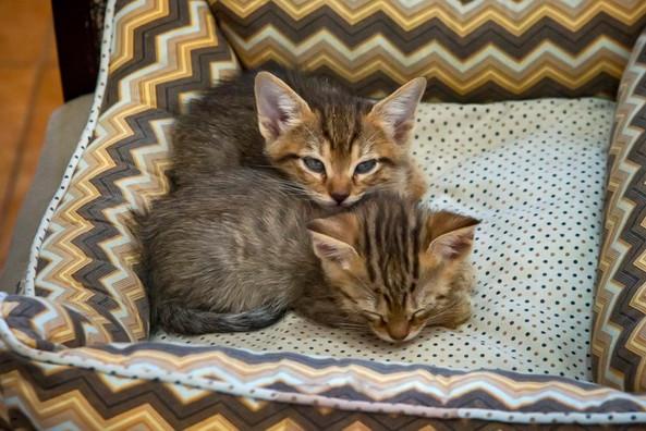 gatinhos-bebes-dormindo_02jpg