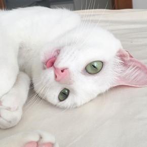 Gatinho-branco.jpg