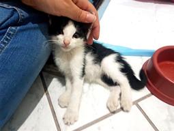 A Adoção de Gatos Filhotes - O Oue Você Deve Saber!