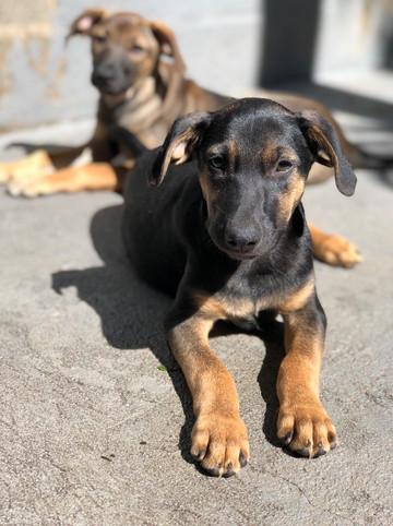joao-cachorro-para-adocao-patinhas-c