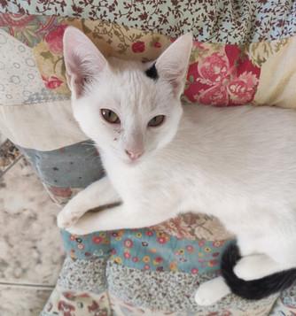 baby-gato-para-adocao_08_edited.jpg