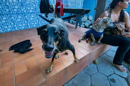 geraldo_cachorro_patinhascarentes_05jpg
