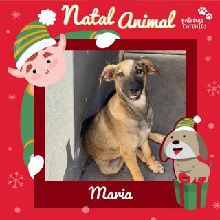 Kit Natal - Maria