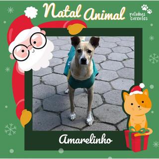 Kit Natal - Amarelinho