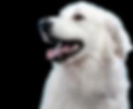 Dog's%20Portrait_edited.png