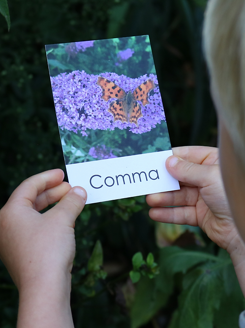 Butterfly Flashcards