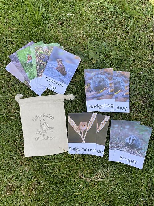 British Wildlife Flashcards