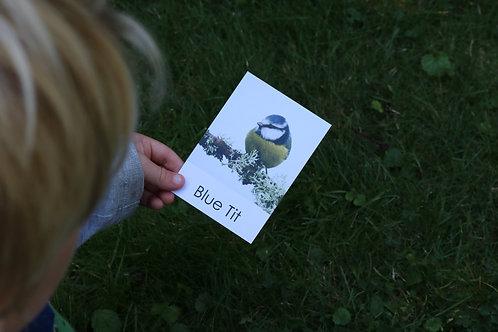 Garden Bird Flashcards