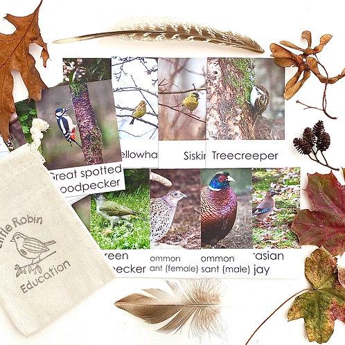 Woodland Bird Flashcards