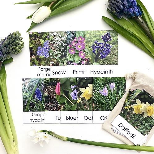 Spring Flowers Flashcards