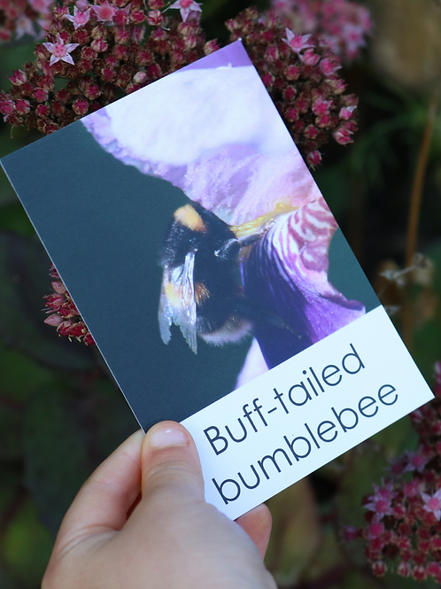 Bee Fact Cards