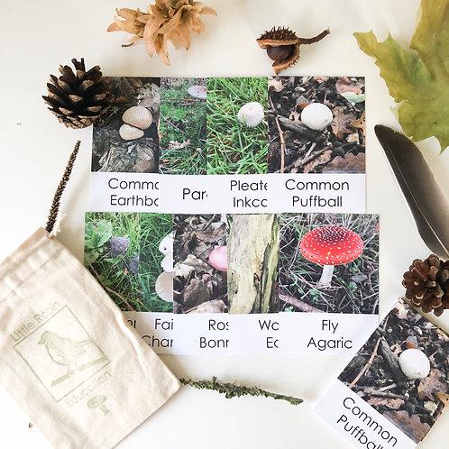 Mushroom Flashcards