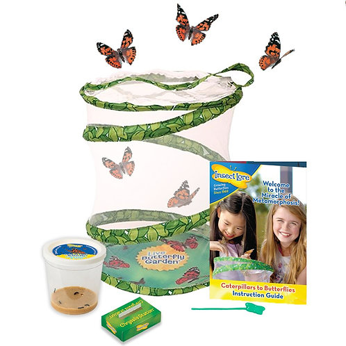 Butterfly Garden with voucher for 3-5 LIVE caterpillars