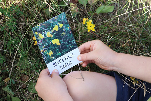 Wildflower Flashcards