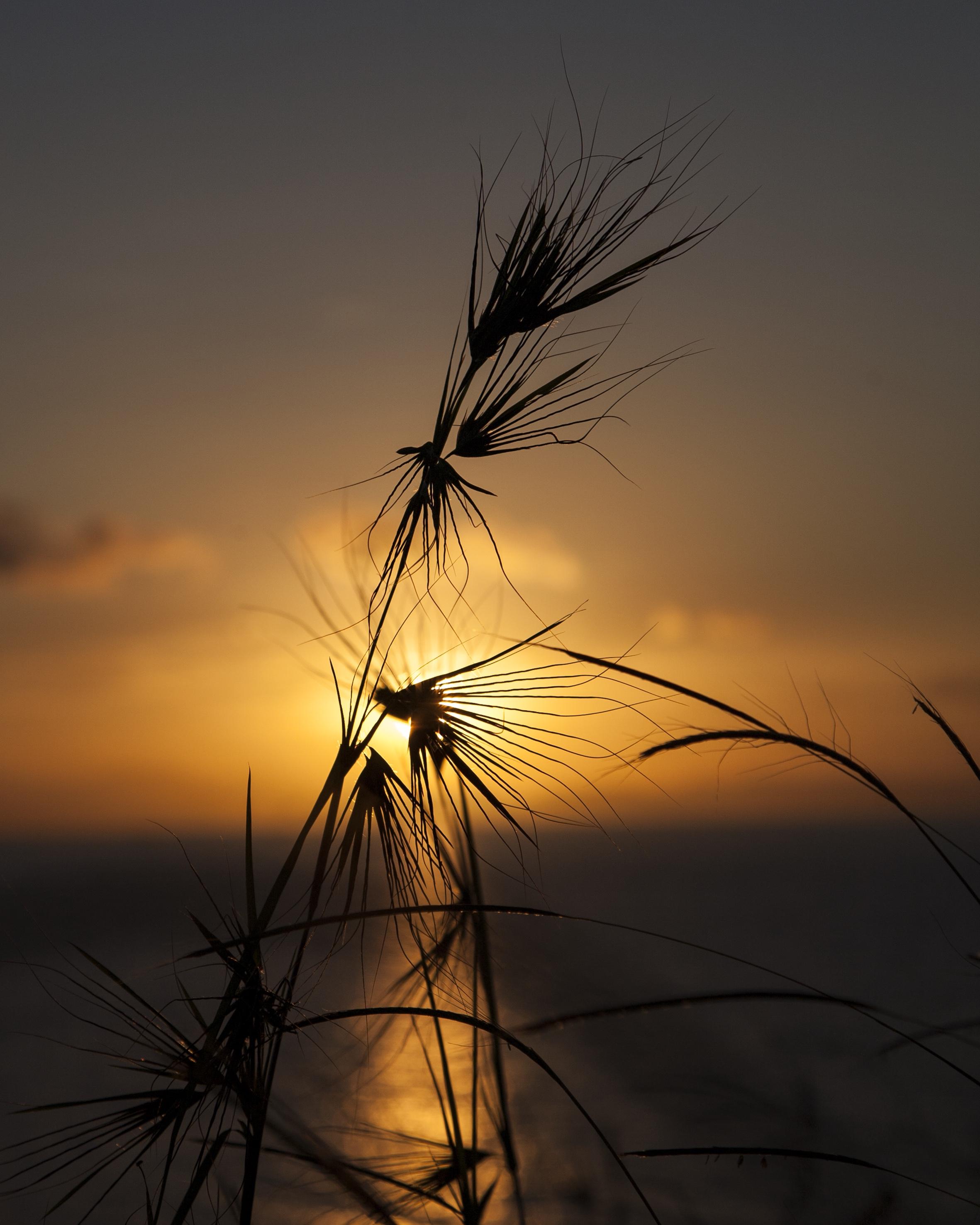 sunset panjang island alt