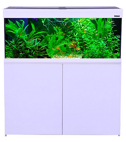 Buy Aqua One Aquatica Aquarium 240L Online at Fishy Biz | Adelaide | South Australia