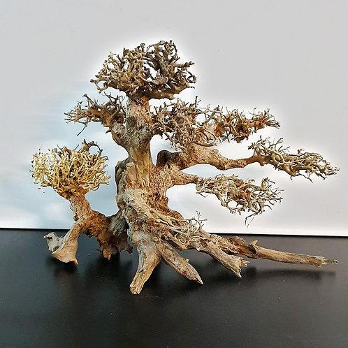 Bonsai Driftwood 35cm x 25cm | Fishy Biz
