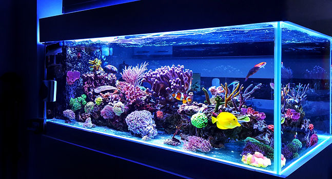 Saltwater freshwater coral reef aquarium repairs and accessories