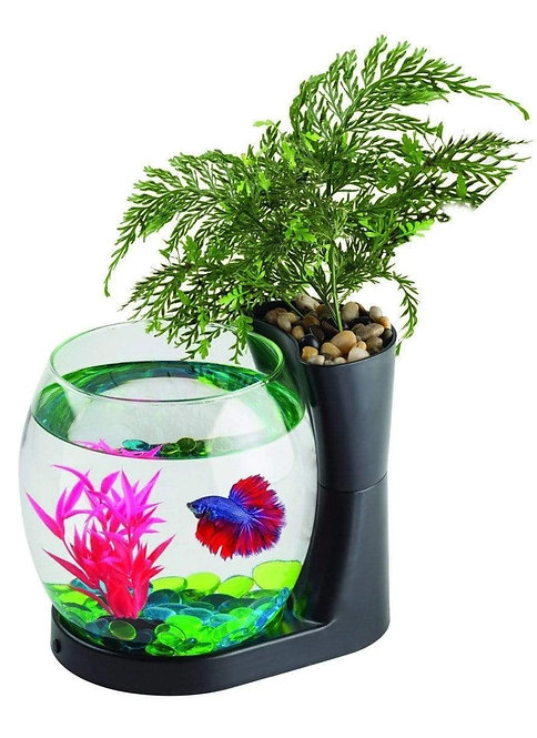 Buy Blue Planet Betta+ Bowl with Planter at Fishy Biz South Australia Adelaide | Tropical Freshwater