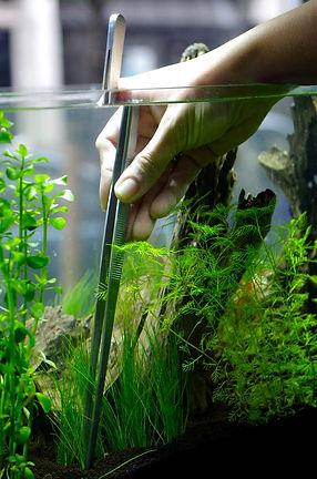 Fishy Biz | Aquascaping | Fish Tank Accessories | Custom Made Glass Supply