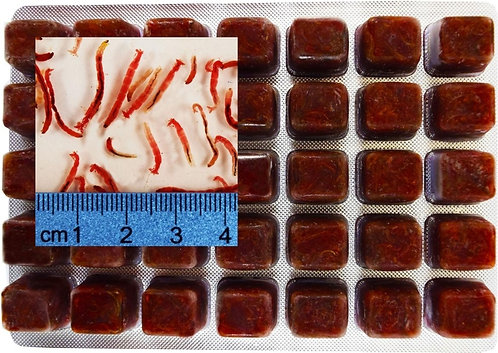 Frozen Bloodworms 100g cube tray | Fishy Biz