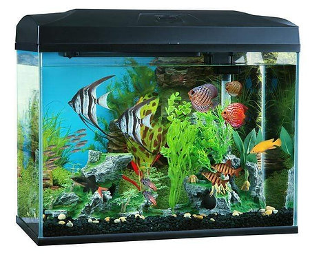 Blue Planet Classic 70 Aquarium (70L) with LED | Aquarium near me | South Australia | Fishy Biz | Tropical Marine