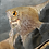 Buy Angel Fish (Pterophyllum Scalare) Online | Fishy Biz | Adelaide | South Australia | Tropical Fish | Aquariums Near Me