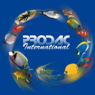 Prodac International Aquarium Products | Tropical Fish Store | Buy Fish Adelaide | Fish Food Prospect | Fish Food Salisbury | Fish Food North Park
