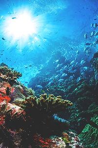 Fishy Biz Online Aquarium Shop | Tropical Fish | Emergency 24hr Maintenance | Aquarium Accessories | Dymax | Aqua One | Sera | Marine Tropical Freshwater Fish