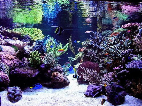 RO Water For Marine Aquariums Delivered / Pick Up Adelaide South Australia | Fishy Biz