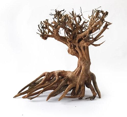 Buy Bonsai Driftwood Online Australia at Fishy Biz | South Australia | Adelaide | Aquarium