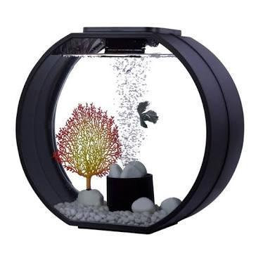 Buy Blue Planet Deco O Mini Aquarium 20L Betta | Fishy Biz | Adelaide | Australia | Tropical Fish | Siamese Fighting Fish