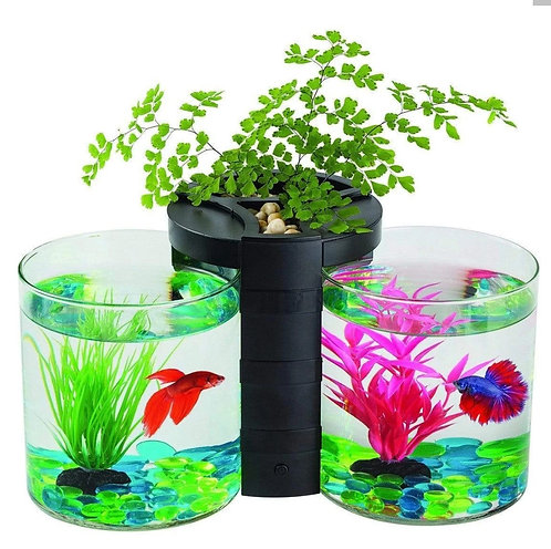 Buy Blue Planet Betta+ Planter Twin Online at Fishy Biz South Australia | Tropical Freshwater Fish