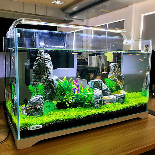 Fishy Biz, South Australia, rent an aquarium for your business, school, church, community, home. Lease a fish tank and claim it on tax. Planted Aquariums. Tropical Fish Tanks