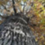 IMG_20171123_231414_262.jpg