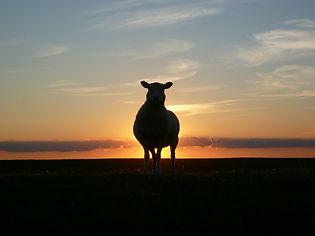 sunset-50494_1920.jpg