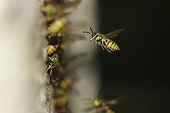 Pest Control Cumbria