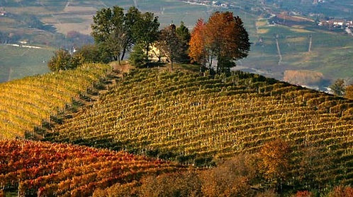Piemonte Wine Tasting - 29.01.2021