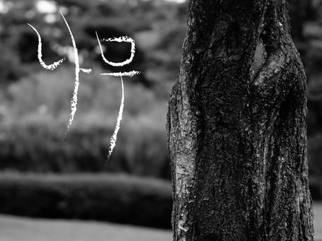 혁이오빠 '나무' - 2014.10.13