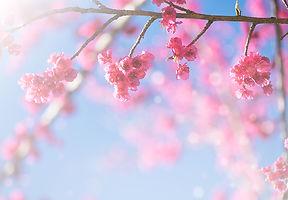 Flower Dance .jpg