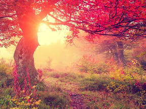 The Preparation Guide for Autumn Equinox