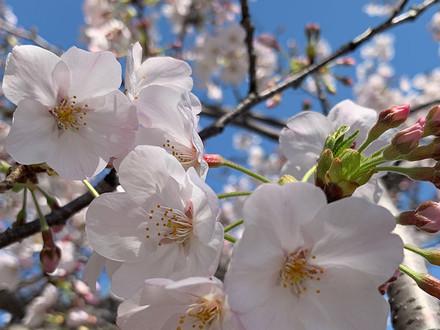 Plant spiritual seeds during Springtime.