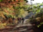 VTT forêt du Gâvre.jpg