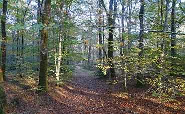 forêt_nov_17.jpg