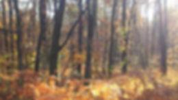 forêt automne.jpg