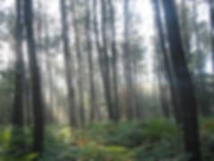 forêt 012.jpg