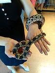 Snake  7-10.jpg